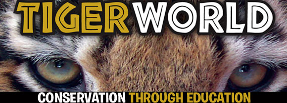 tiger world header
